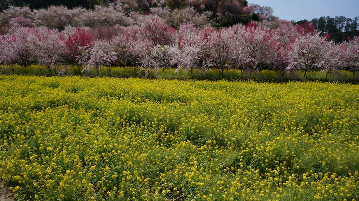 Nishigawa Flower Park in Konan City Kochi Prefecture 高知県香南市 西川花公園