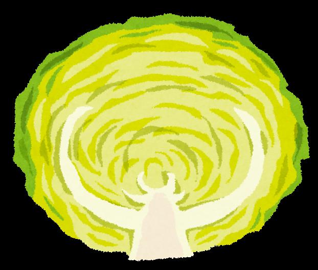 Cabbage キャベツ