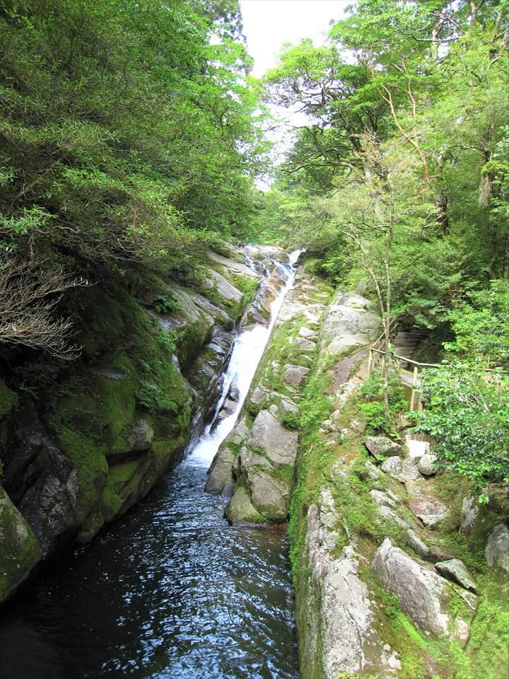 Yakushima83Yakushima Island National Park, World Natural Heritage in Japan 世界自然遺産 屋久島